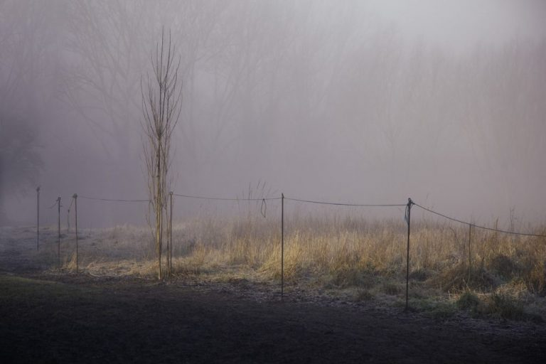 foggy fields photographs