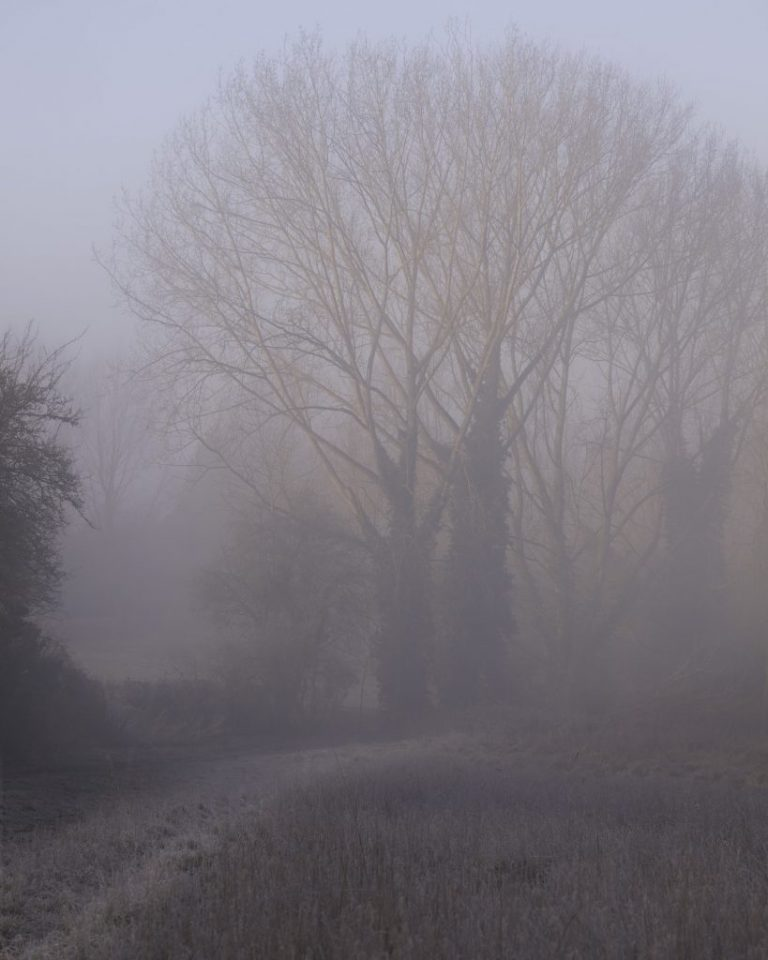 down my lane misty fog images