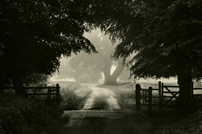In The Mist 03