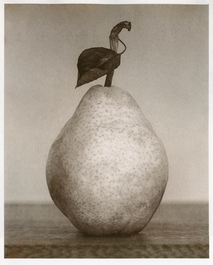 Albumen print of a pear for the Royal Photographic Society exhibition